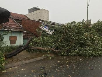 Cập nhật bão số 9: Gió giật mạnh, nhiều cây xanh bị quật ngã trước giờ bão đổ bộ