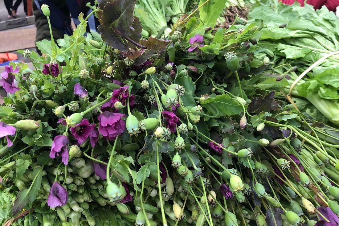 Cây thuốc phiện bán như rau ở chợ vùng biên Việt - Lào