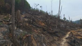 Đắk Lắk: Rừng nguyên sinh tiếp tục bị hủy diệt, đốt phá lấn chiếm.