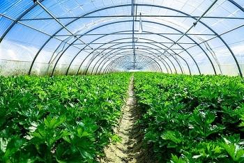 """Tạo đà phát triển nông nghiệp công nghệ cao, """"đòn bẩy"""" nằm ở đâu? (Bài 4)"""