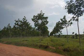 Hòa Bình chuyển 10.000 m2 đất rừng để xây khu nghỉ dưỡng và chăm sóc sức khỏe NCT