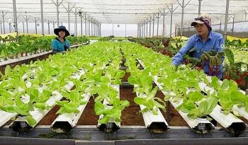 Phát triển nông nghiệp ứng dụng công nghệ cao còn vướng nhiều rào cản